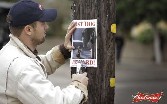 Budweiser_-_Lost_Dog_-_Hero_Image_-_2015.1.6-562x375